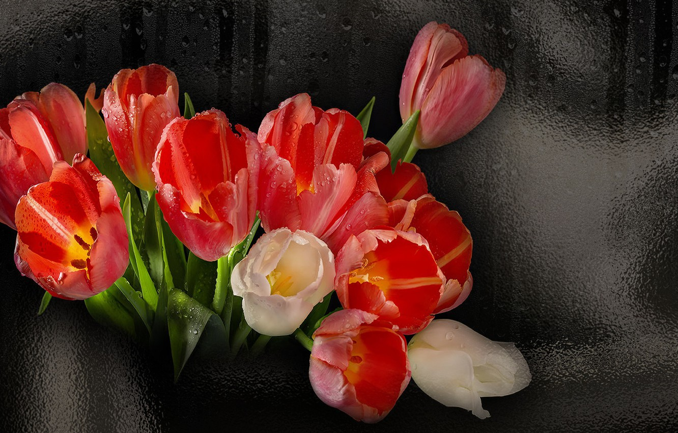 Photo wallpaper flowers, beauty, glamour, tulips, the Wallpapers