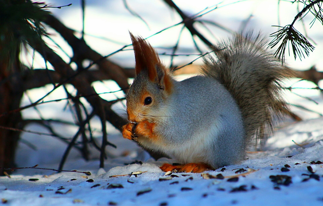 Photo wallpaper forest, snow, protein, twigs