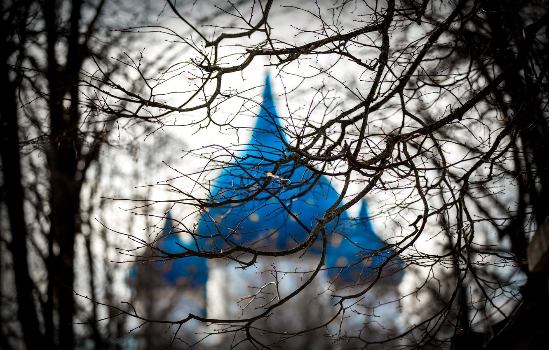 Photo wallpaper branches, tree, temple, dome