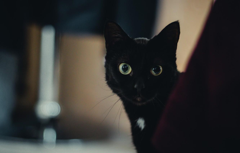 Photo wallpaper cat, eyes, wool, black, looks