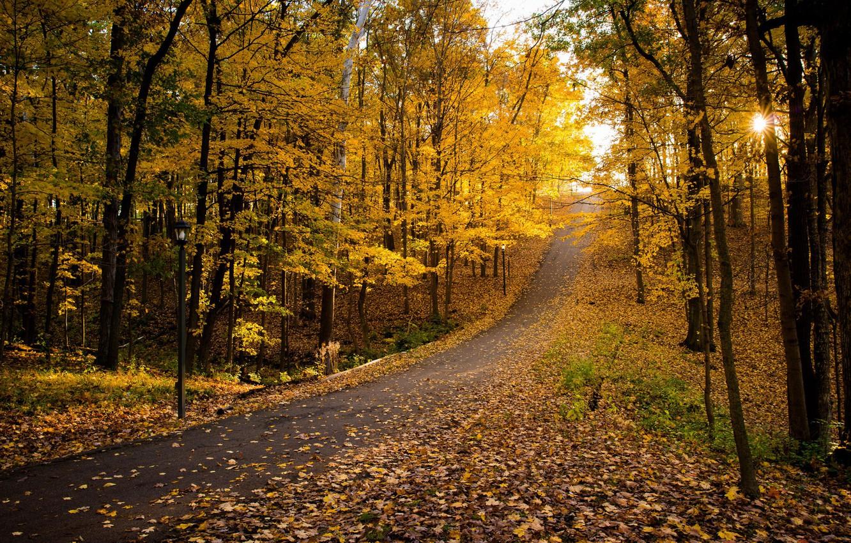 Photo wallpaper road, autumn, Park, foliage