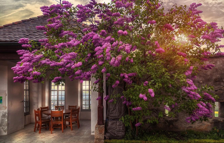 Photo wallpaper the sun, house, Bush, chairs, lilac