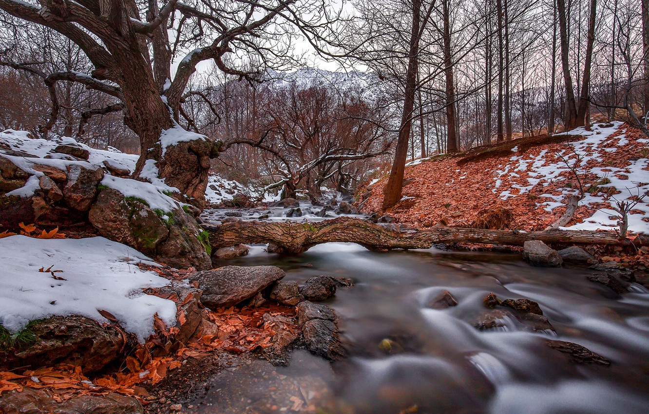 Photo wallpaper autumn, forest, leaves, snow, trees, nature, stream, stones