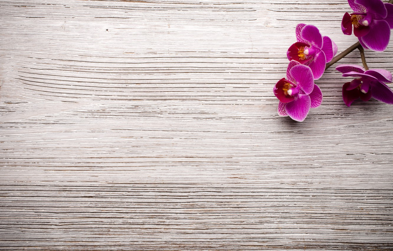 Photo wallpaper wood, Orchid, flowers, orchid