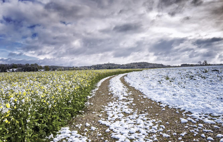 Photo wallpaper field, snow, rape