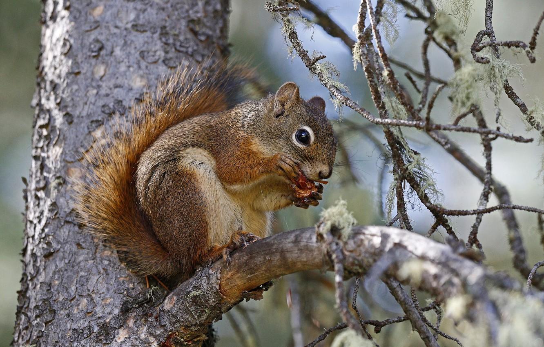 Photo wallpaper nature, tree, branch, protein, squirrel