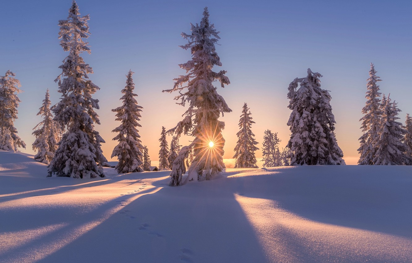 Photo wallpaper winter, the sun, snow, trees, nature, home, the evening
