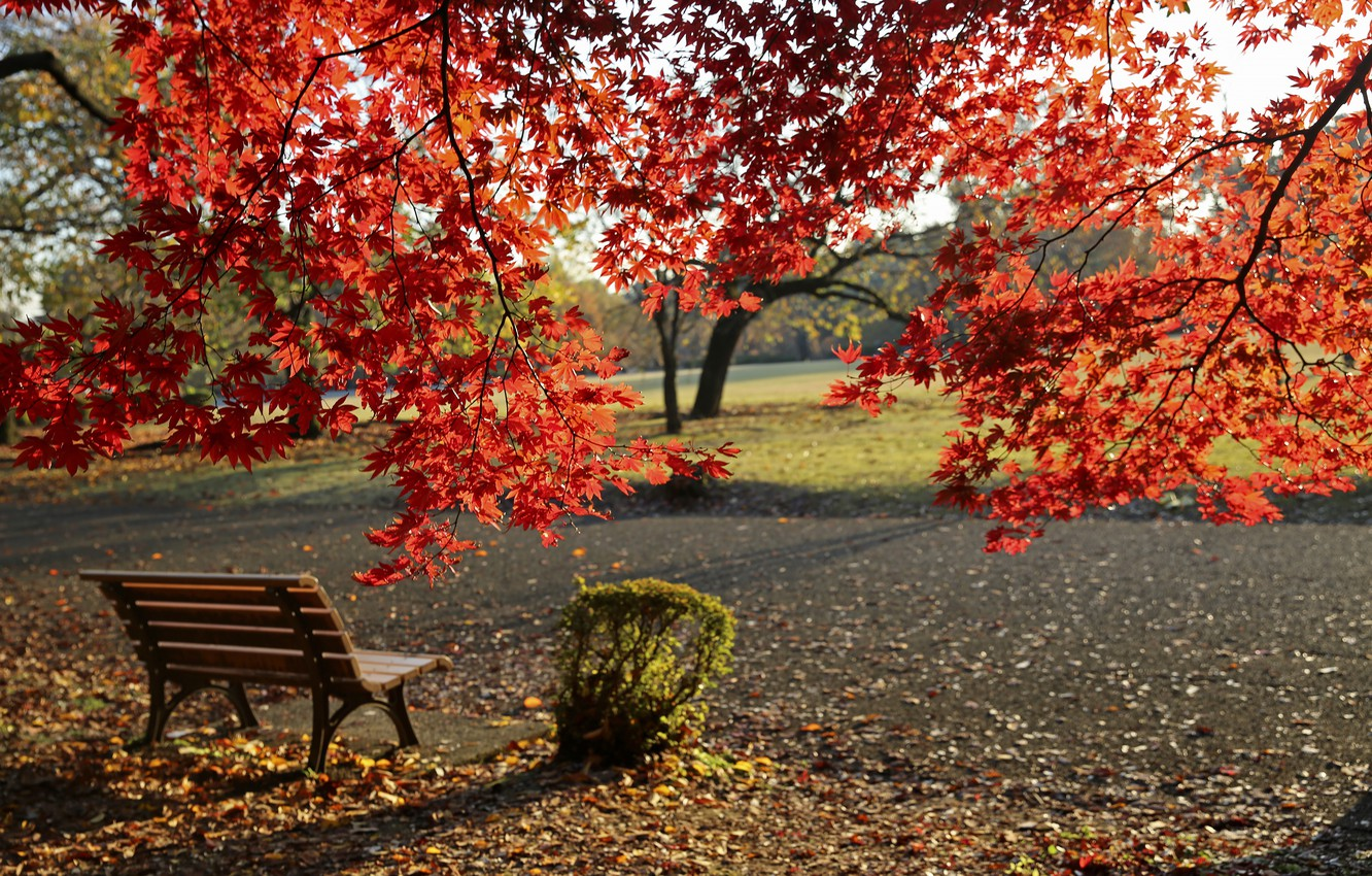 wallpaper autumn, bench, park, fall, foliage, park, autumn, colors