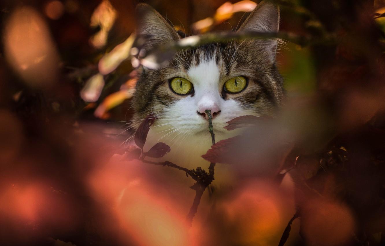 Photo wallpaper cat, cat, look, branches, muzzle, bokeh