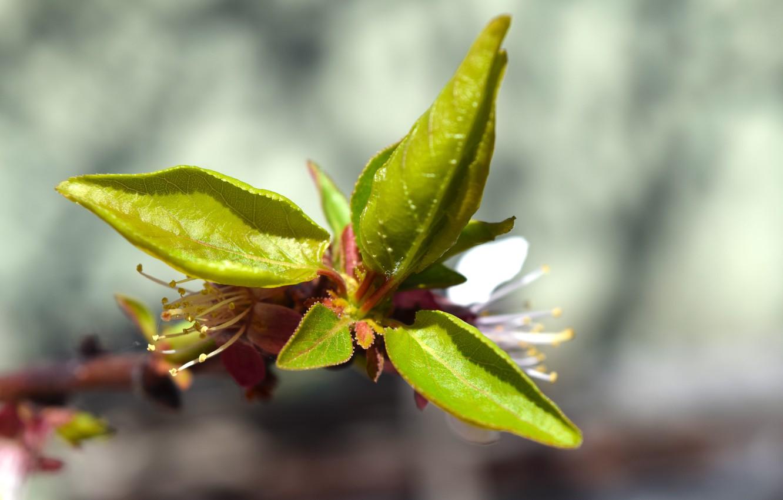 Photo wallpaper leaves, macro, spring, green