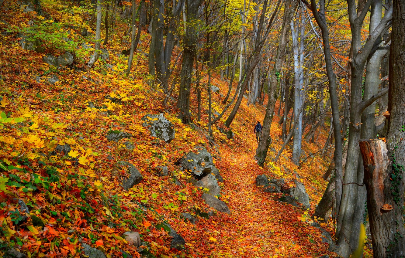 Photo wallpaper Autumn, Trees, Forest, Fall, Foliage, Autumn, Colors, Forest, Trees, Falling leaves, Leaves