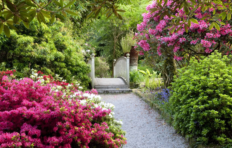 Photo wallpaper garden, ladder, track, UK, Magnolia, flowering trees, United Kingdom, gardens