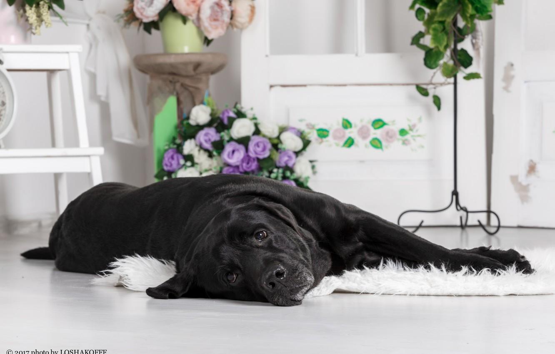 Photo wallpaper flowers, room, furniture, dog