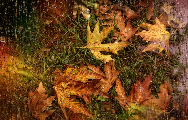 Photo wallpaper drops, rain, autumn leaves, Kide Fotoart
