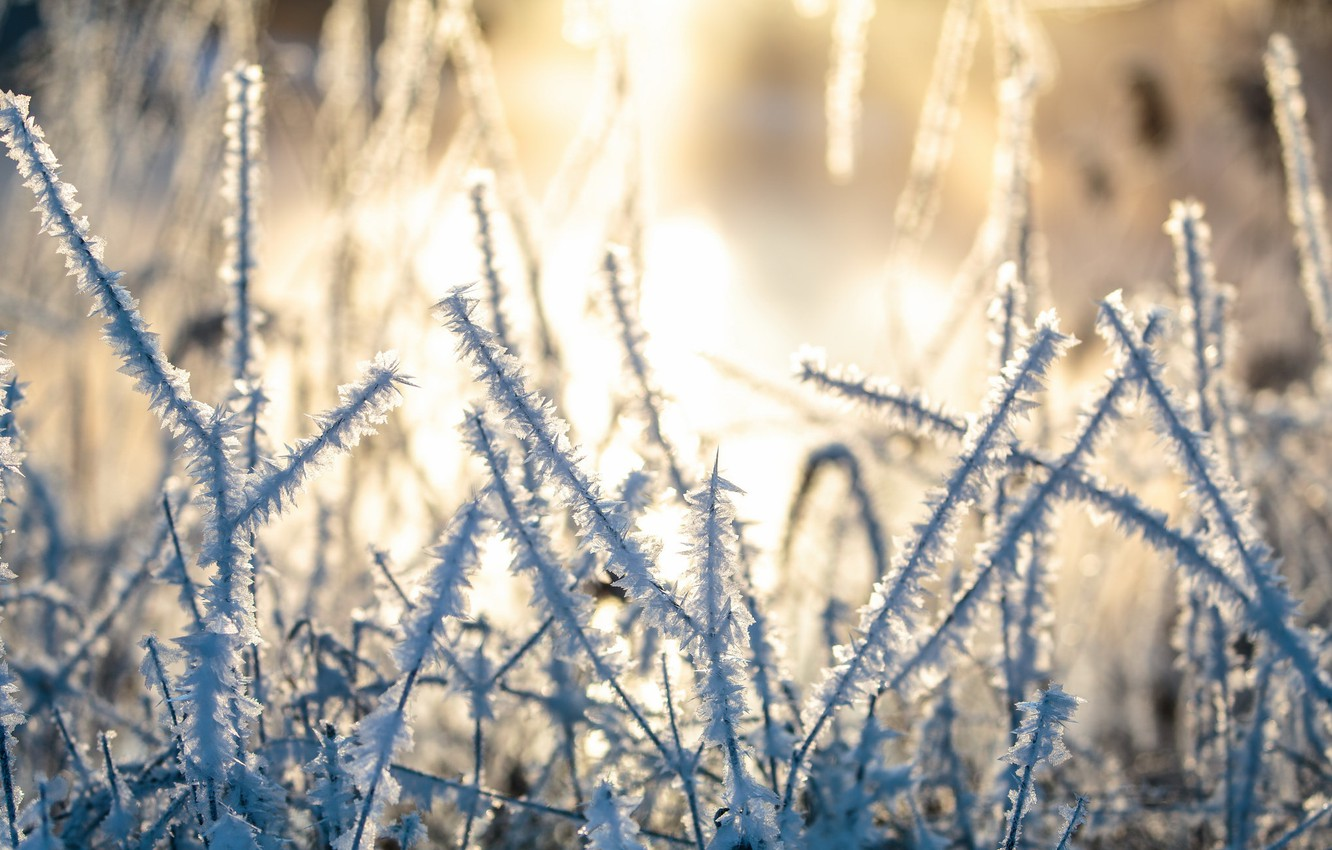 Photo wallpaper cold, winter, frost