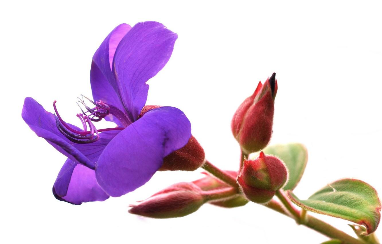 Photo wallpaper flower, nature, petals, stem, exotic