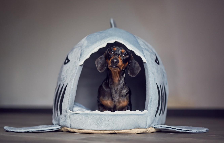 Photo wallpaper house, dog, house