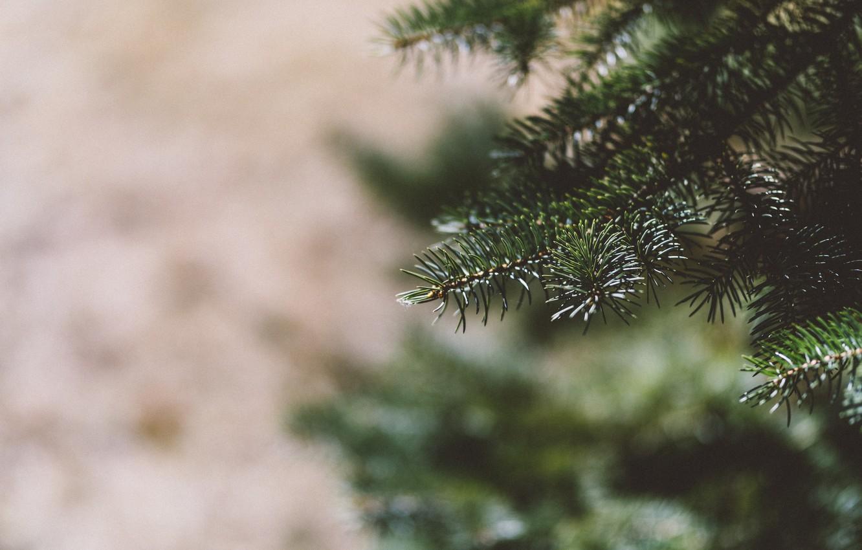 Photo wallpaper needles, tree, tree, green, bokeh