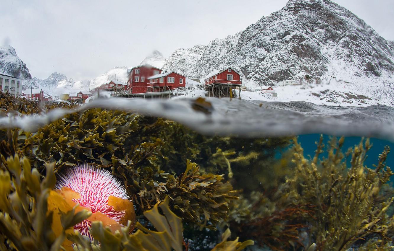 Photo wallpaper winter, snow, algae, mountains, life, Norway, under water, the village, split