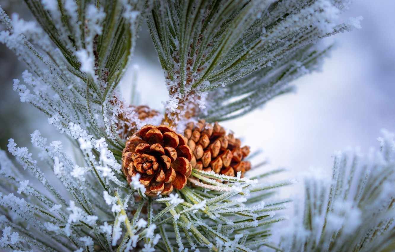 Photo wallpaper frost, macro, bump