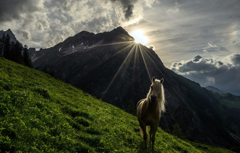 Photo wallpaper mountains, horse, morning
