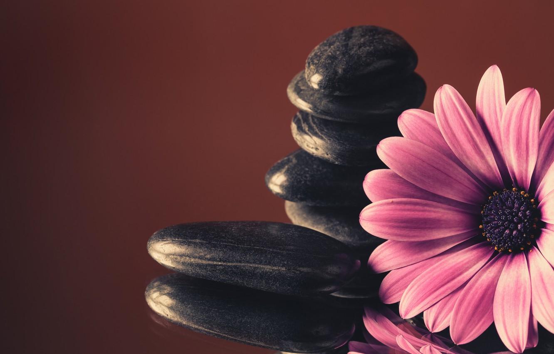 Photo wallpaper stones, colorful, flowers, gerbera, purple, gerbera