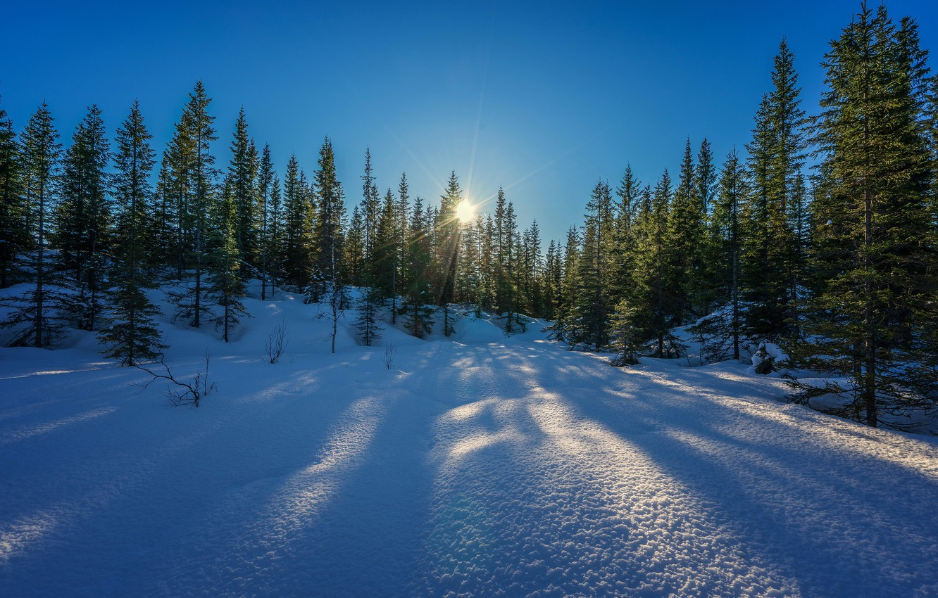Photo wallpaper winter, forest, the sky, the sun, rays, snow, trees