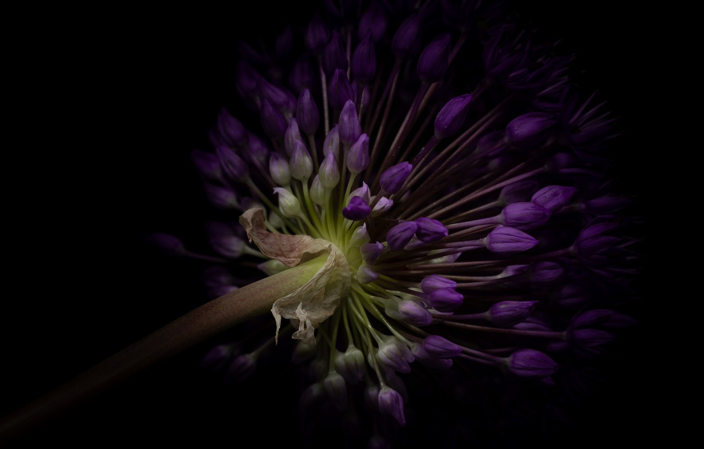 Photo wallpaper purple, bow, in Durban