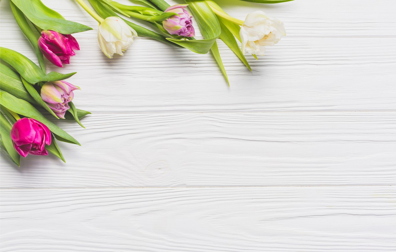 Photo wallpaper flowers, spring, colorful, tulips, Board, wood, pink, flowers, tulips, spring