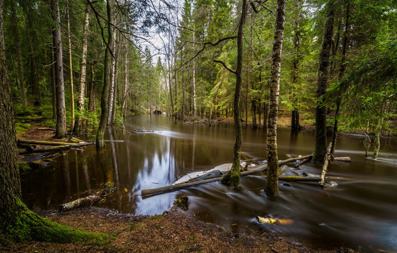 Photo wallpaper forest, water, trees, spill