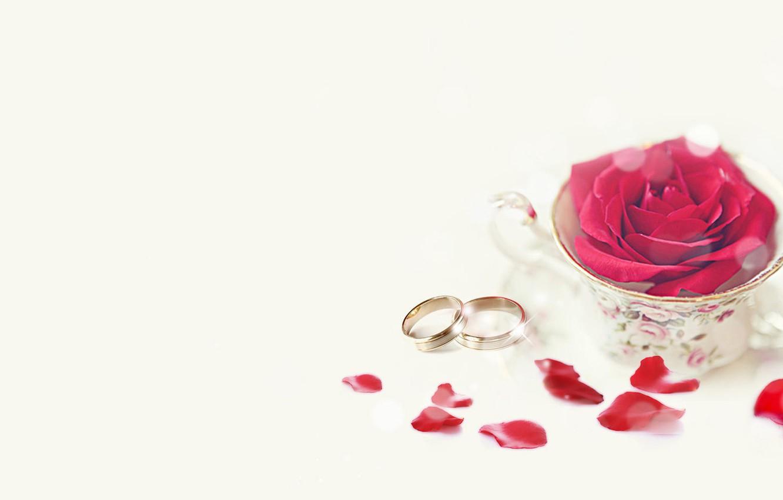 Wallpaper Holiday Rose Wedding Rose Petals Engagement
