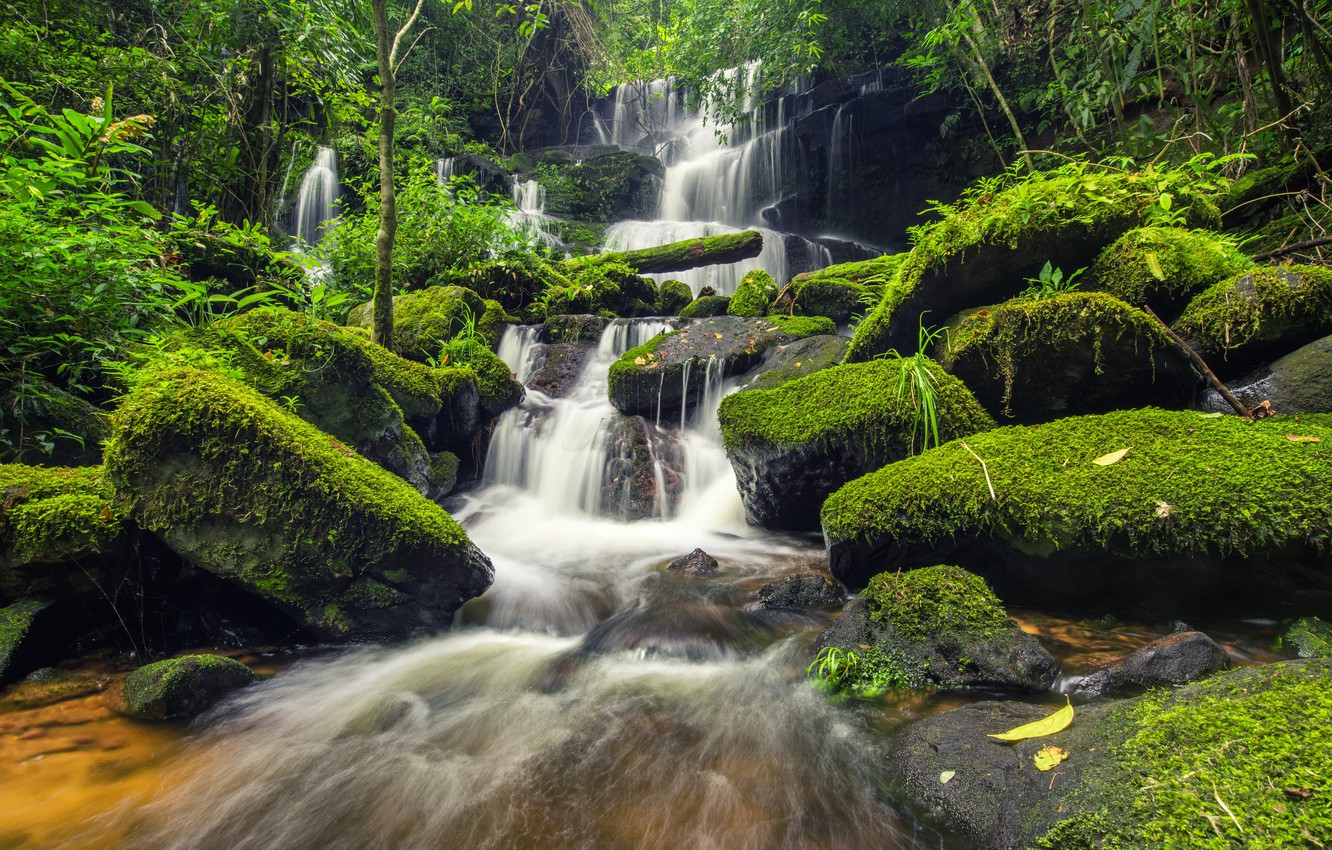Wallpaper Forest River Stones Green Waterfall Moss