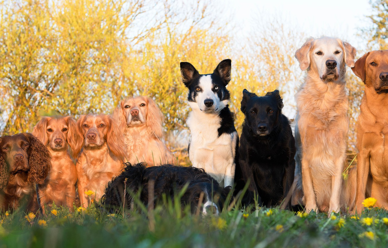 Photo wallpaper dogs, a lot, group photo