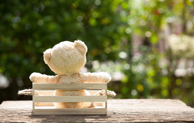 Photo wallpaper toy, garden, bear, bear, garden, teddy, lonely, cute, lonely