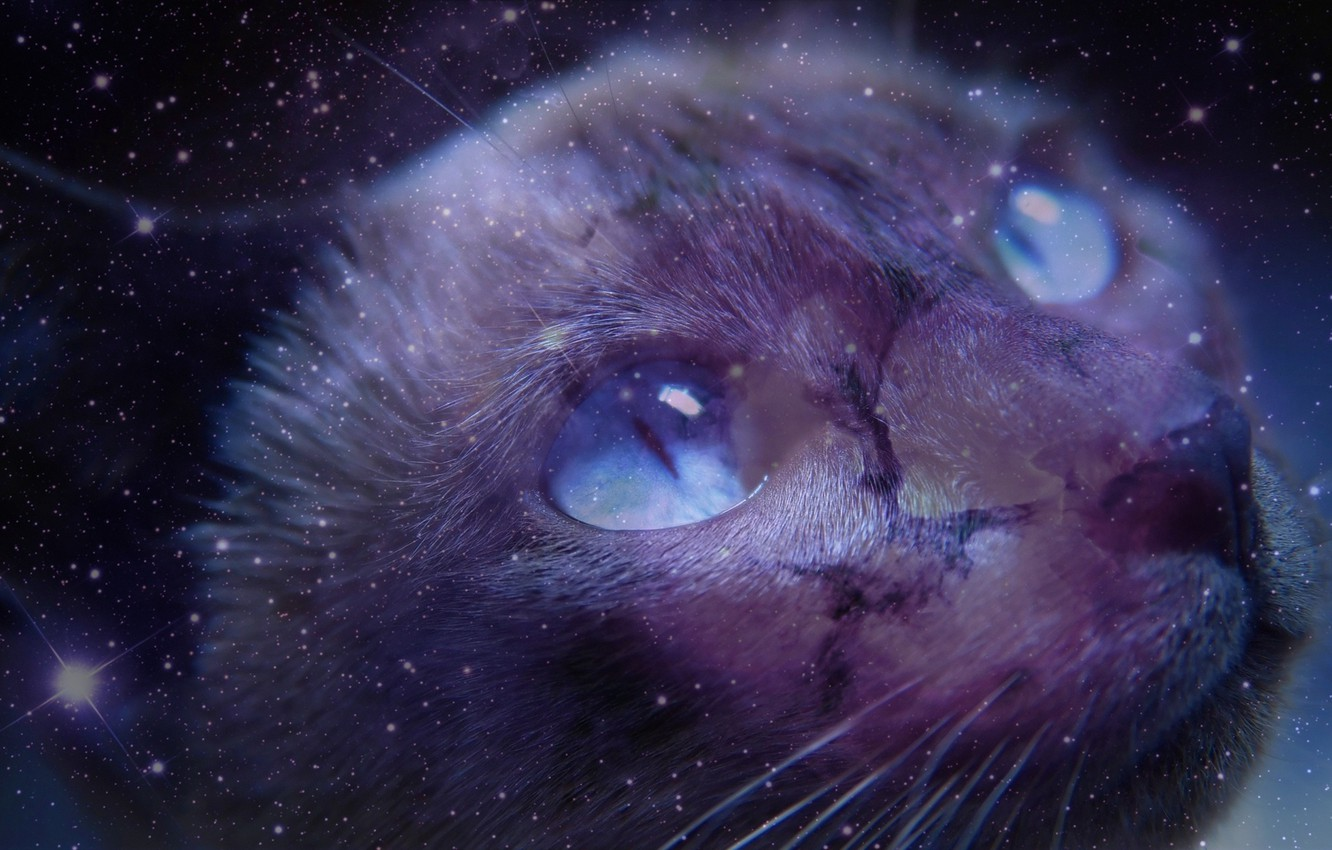 Wallpaper Cat Look Space Images For Desktop Section кошки
