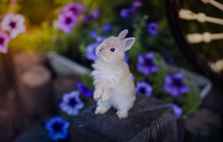 Photo wallpaper flowers, small, rabbit