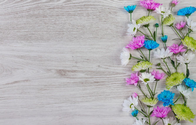 Photo wallpaper flowers, colorful, white, chrysanthemum, wood, blue, pink, flowers