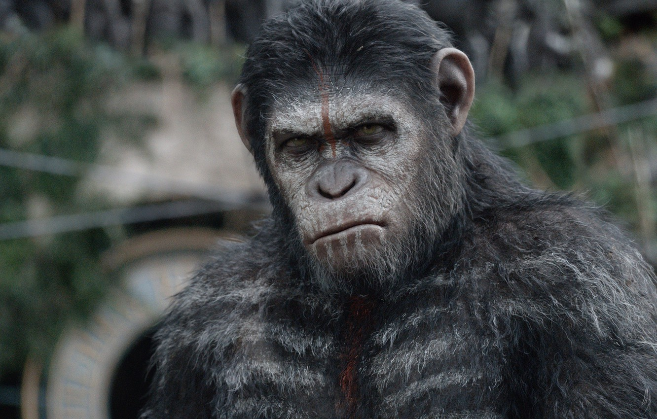 Photo wallpaper cinema, movie, film, Cesar, War for the Planet of the Ape