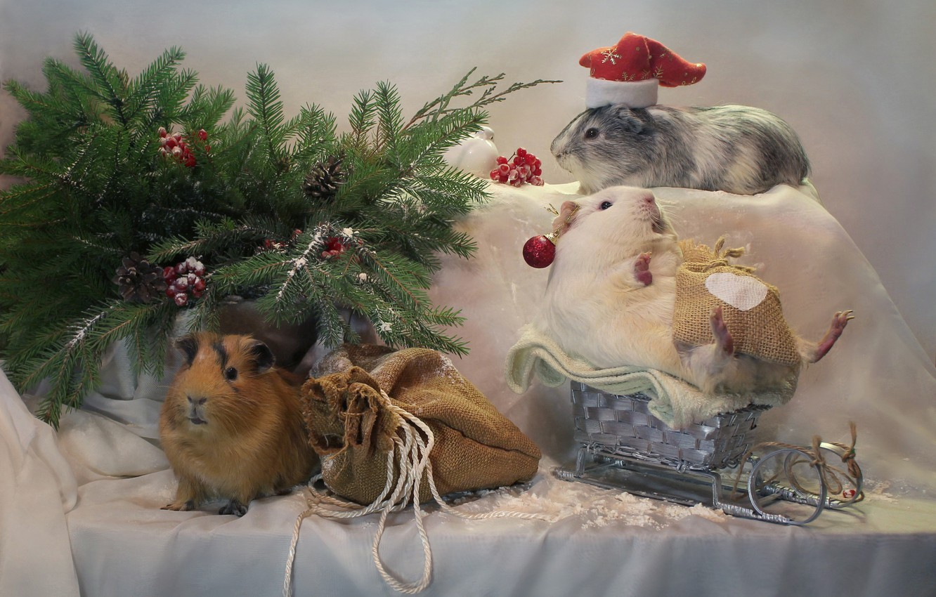 Photo wallpaper winter, animals, tree, new year, Christmas, sled, December, composition, Guinea pigs, Christmas pigs