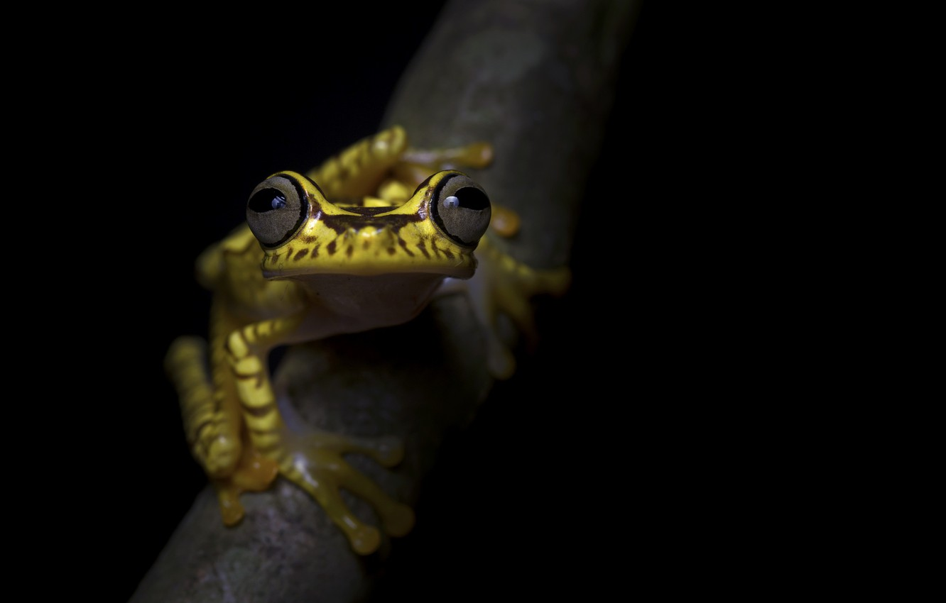 Photo wallpaper nature, background, frog