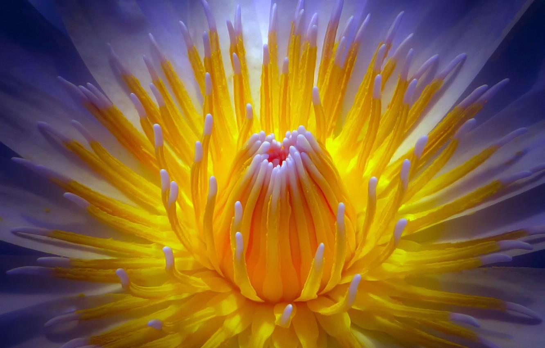 Photo wallpaper flower, macro, mid