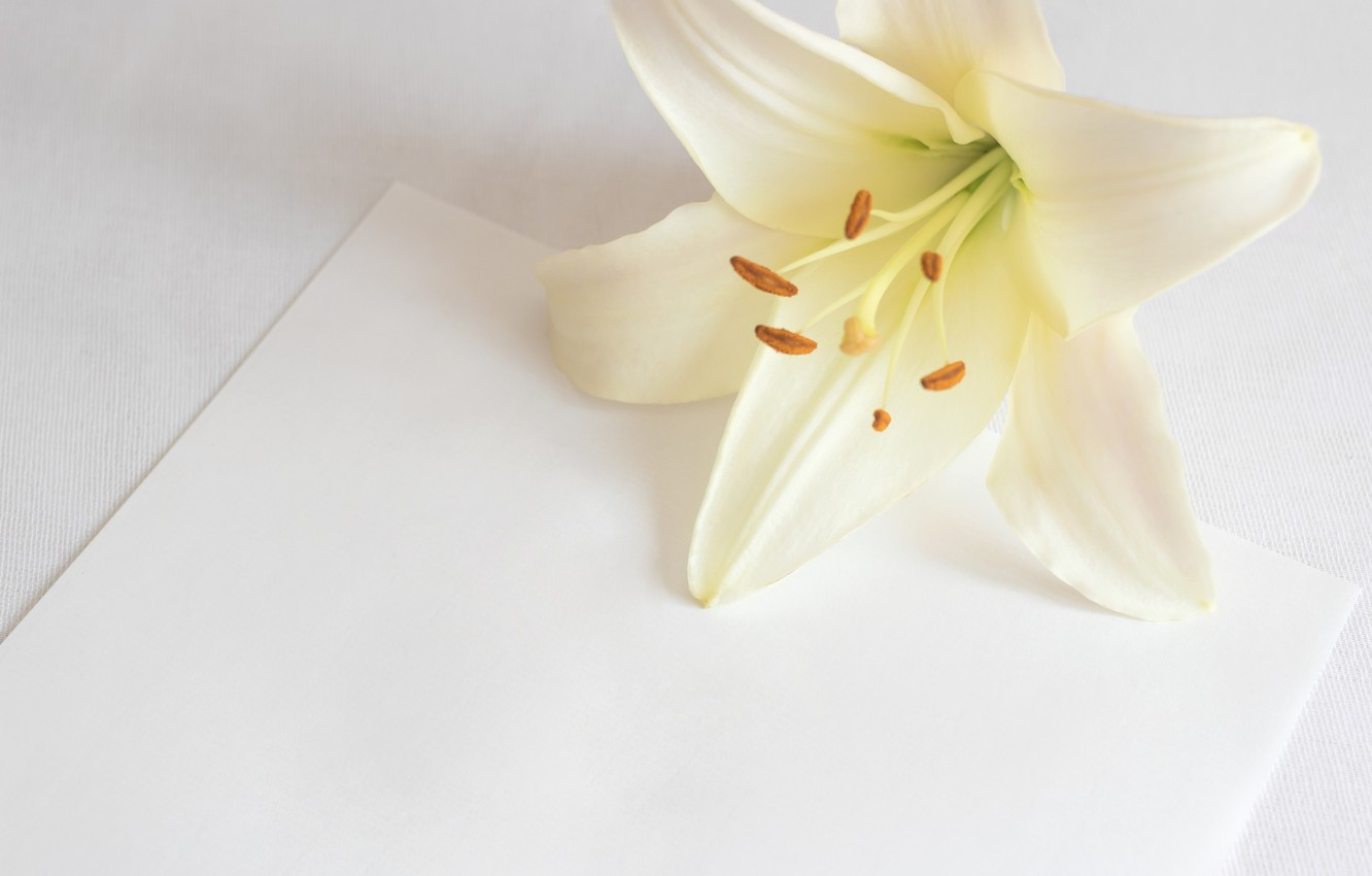 Photo wallpaper flower, paper, background, Lily