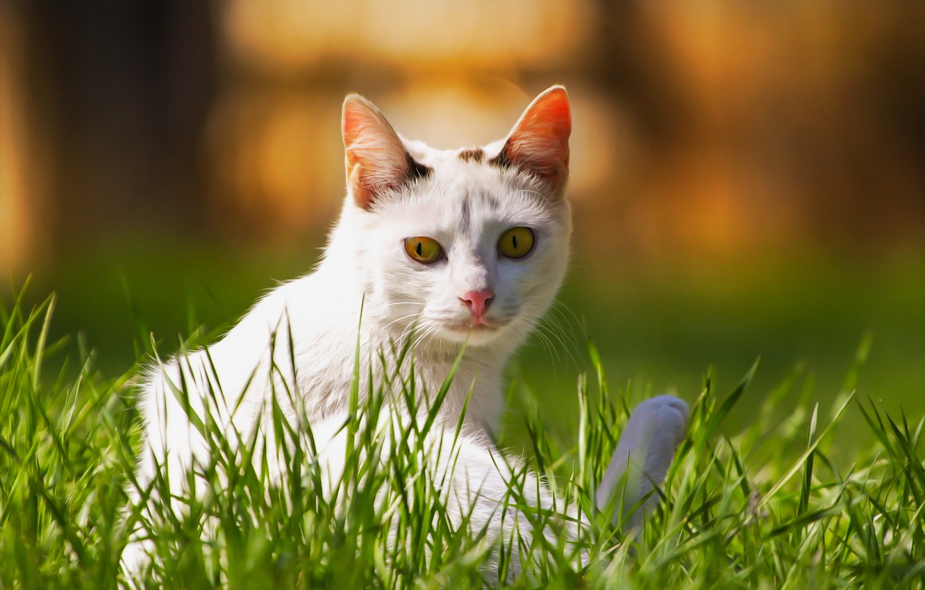 Photo wallpaper cat, background, weed