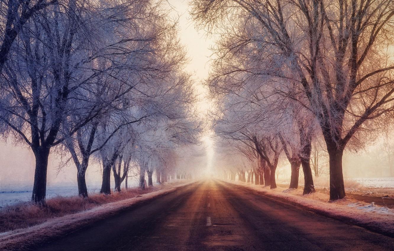 Photo wallpaper winter, frost, road, fog