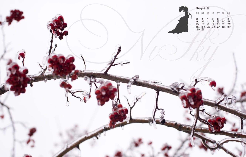 Photo wallpaper ice, winter, berries, red, white, contrast, calendar, Rowan, January, 2017, justnvsky, ledjanogo