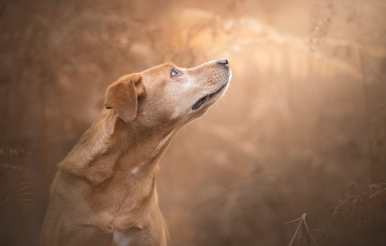 Photo wallpaper face, background, dog, bokeh