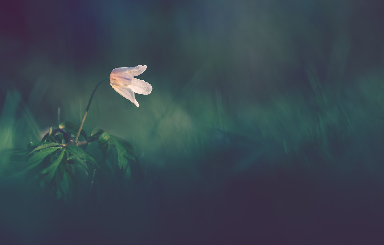 Photo wallpaper flower, nature, background