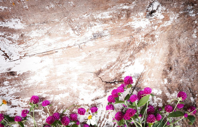Photo wallpaper background, Flowers, Clover, Field