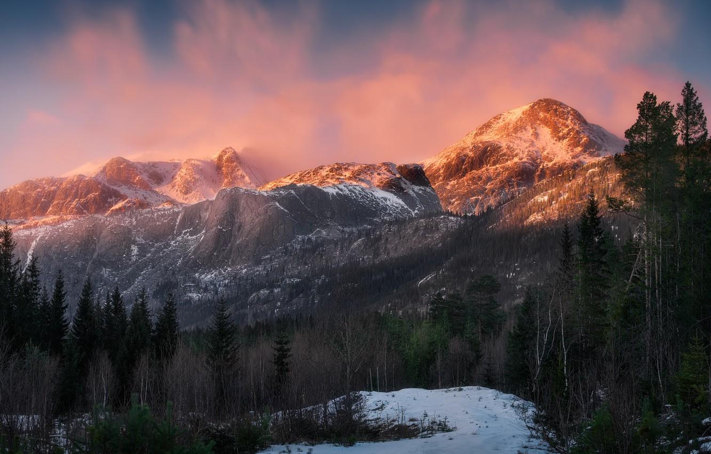 Photo wallpaper forest, light, snow, mountains, nature, Norway, Norway, Hemsedal, Hemsedal