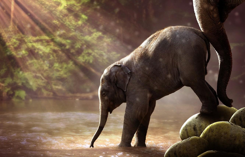 Photo wallpaper forest, river, animals, nature, water, savanna, savannah, trunk, wildlife, Elephant, sun rays, son, mother, baby …
